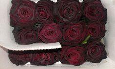 Roses black baccara