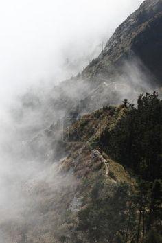 góry z drzew i mgła