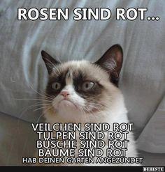 Rosen sind rot.. | Lustige Bilder, Sprüche, Witze, echt lustig