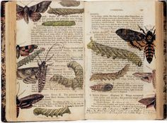 .A copy of 'Elements of the Natural History of the Animal Kingdom' with watercolour additions by Albin Burt (1784-1842). Sold at Sotheby's in 2002 at a Natural History,