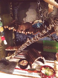 New stuff for rat cage, critter nation, rat DIY, wooden self.....some great DIY ideas for endless rattie fun !