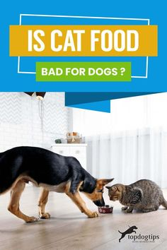 It happens, your cat walks away from its food and your dog eats all of it. Luckily they will be fine, but don't let them do it often. Dog Health Tips, Pet Health, Mini English Bulldogs, Foods Bad For Dogs, Dog Eating, Cat Walk, Cat Food, Dog Care, Dog Training