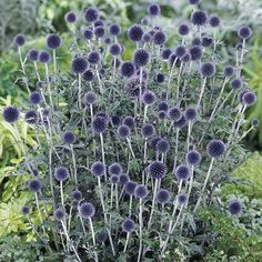 Add color to your garden with Sun Perennials from Spring Hill Nurseries. Shop plants that thrive in full to partial sun. Herbaceous Perennials, Flowers Perennials, Partial Shade Perennials, Perennial Plant, Sun Plants, Garden Plants, Flowers Garden, Flower Gardening, Desert Plants