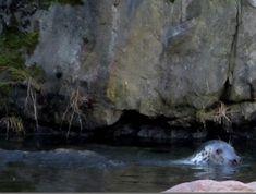 Matkojeni blogi: Vain hylkeitä! Sieraimia, viiksiä, tuijotuksia, Kansankoti 24.02.2016 Satu, Camera Obscura, Rocky Horror, Culture Travel, Ecology, Gotham, Travel Photos, Mount Rushmore, Mountains