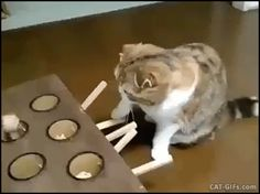 CAT GIF • New funny and ingenious Cat toy: catch me if you can