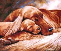 Irish Setter Mama and Pup. Qué ternura!