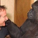 These Photos of Koko the Gorilla Grieving the Death of Robin Williams Will Make You Cry