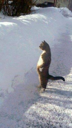 The Walking Kitty Cat