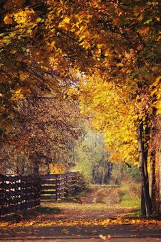 Autumn on a country road. Fall Images, Fall Pictures, Beautiful Places, Beautiful Pictures, Autumn Scenes, Happy Fall Y'all, Fall Halloween, Autumn Leaves, Paths