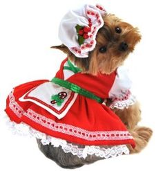 This dog costume is great for Halloween!Two piece candy cane cutie Christmas dog costume, includes v-shaped corset top, attached lace petticoat, apron with candy cane and bow applique, and adjustable Small Dog Costumes, Dog Halloween Costumes, Pet Costumes, Christmas Costumes, Christmas Outfits, Costume Ideas, Animal Costumes, Yorkies, Pet Parade