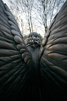 ❥ Angel wings. By Lou Star - Beautiful photograph