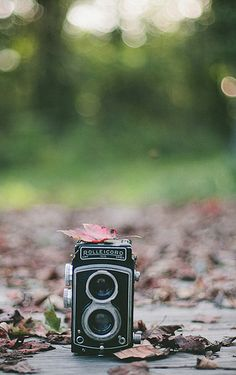 An old camera ~ Champagne Toast by Melissa Brown