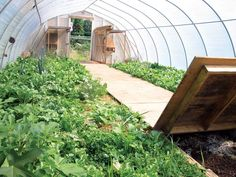 Inside the author's backyard greenhouse: The wooden pathway covers the worm bi… - All For Garden Cheap Greenhouse, Indoor Greenhouse, Backyard Greenhouse, Greenhouse Growing, Greenhouse Plans, Portable Greenhouse, Indoor Garden, Permaculture Design, Wooden Pathway
