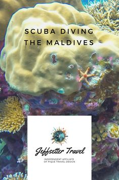 Scuba Diving in the Maldives - Jeffsetter Travel Shark Diving, Scuba Diving, Coral Garden, World Photo, Once In A Lifetime, Luxury Travel, Maldives, Travel Photos, Blogging