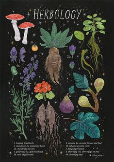 Herbology Starry Background From Amanda Herzman In - Herbology Starry Background From Amanda Herzman April Amandaherzman This Is Part Of A Larger Series Im Currently Working Harry Potter Magical Plant Botanical Illustrations This Po Room Posters, Poster Wall, Poster Prints, Art Prints, Band Posters, Linocut Prints, Harry Potter Poster, Photo Wall Collage, Collage Art