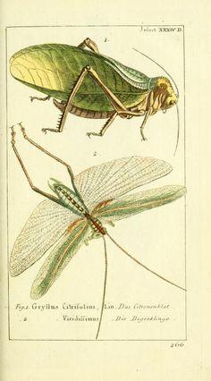 Bd 6 plates (1784) - Gemeinnüzzige Naturgeschichte des Thierreichs : - Biodiversity Heritage Library