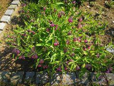 Plants, Blog, Blogging, Plant, Planets