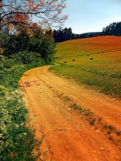 Hiking trail through springtime nature by Patrick Jobst. Hirschbach im Mühlkreis, Austria Dirt Road Anthem, Central Europe, Hiking Trails, Spring Time, Austria, Paradise, Around The Worlds, Country Roads, Explore