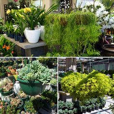 Hanging baskets are perfect for decorating verandahs or softening garden structures! Poppy's Home and Garden have a huge range of hanging baskets in rhipsalis, sedum jelly bean, string of pearls, string of beans, kalanchoe and so much more!