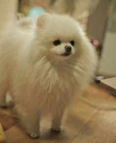 White cotton ball