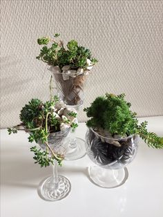 Mini garden in crystal. Do you have some broken crystal glass? Do not throw it, save them and create a lovely green oasis! Like these :-) #minigarden #crystalgarden