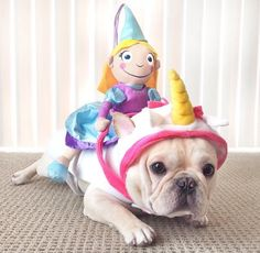 French Bulldog in a Unicorn Costume