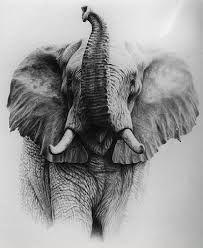 Resultado de imagen de elefante africano dibujo