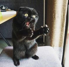 Cat Lovers Community - Your Daily Source of Cat Stories and Funny Cat Memes Funny Animal Memes, Cute Funny Animals, Funny Animal Pictures, Cute Baby Animals, Funny Cats, Odd Pictures, Cats Humor, Animal Humor, Funny Memes