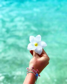 The maldives island the maldive islands цветы, цве Heavens On Fire, Vsco Pictures, Vsco Pics, Palm Springs Style, Beach Flowers, Ocean Wallpaper, I Love The Beach, Tropical Vibes, Summer Aesthetic
