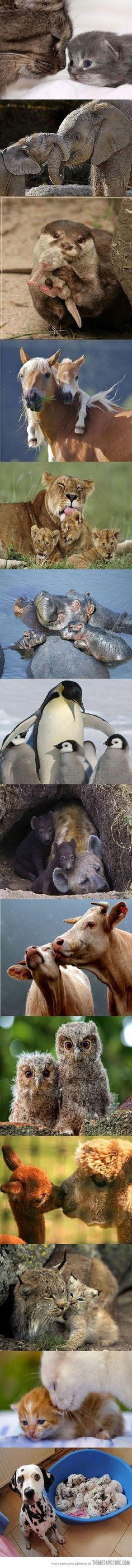 Baby animals and their moms!
