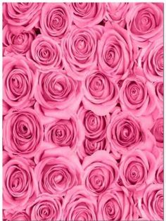 Kate Fabric Pink Rose Flower Clusters Backdrop Photography