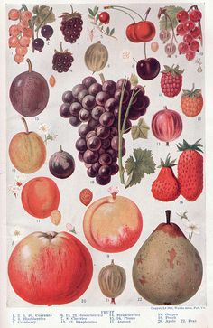 """Fruit page 1214-1215 """"The Home and School Reference Work"""" Vol. III 1917"""