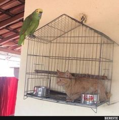 24 Weird Animal Photos That Deserve a Second Look - World's largest collection of cat memes and other animals Funny Animal Memes, Funny Animal Pictures, Cat Memes, Funny Photos, Funny Dogs, Funny Animals, Cute Animals, Scary Animals, Funniest Animals