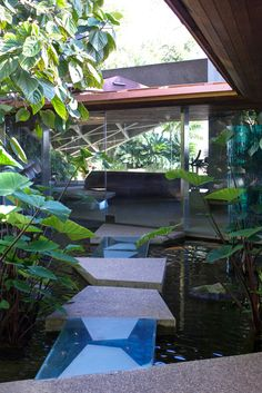When Goldstein bought the house, the property only held one tree—which is still there to this day. He made a goal to create his own tropical jungle, which now extends over four acres of the property.