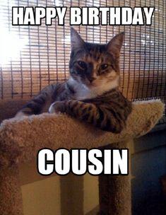 54 Ideas Funny Happy Birthday Cat Hilarious For 2019 Funny Cat Memes, Funny Shit, Funny Cats, Funny Animals, Cute Animals, Funniest Memes, Funniest Animals, Silly Cats, Funny Humor