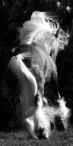 Gypsy Vanner / Irish Cob / Drum Horses on We Heart It All The Pretty Horses, Beautiful Horses, Animals Beautiful, Cute Animals, Pretty Animals, He's Beautiful, Wild Animals, Beautiful Pictures, Gypsy Horse