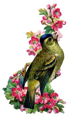 Vintage Image - Bird with Pink Cherry Blossoms - The Graphics Fairy