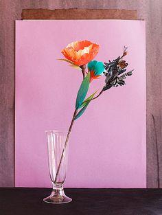 flowers #celebrateeveryday