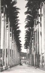 """Rua das Palmeiras - Joinville - Ao mesmo tempo em que projetou e construiu o palacete, Brüstlein queria surpreender o príncipe em algo mais. Na primeira vez que esteve no Brasil, em 1838, François Ferdinand, o príncipe de Joinville, então com apenas 20 anos, teria observado a variedade de palmeiras existentes e exclamado """"Partout lê cocotier, mon arbre favori"""".A idéia de Brüstlein foi de criar uma alameda de palmeiras, como acesso ao Palacio desde a rua dos Principes. New York Skyline, Snow, Ferdinand, Outdoor, Palm Plants, Santa Catarina, Street, First Time, Weather"""