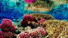 The planet's coral reef systems are very fragile, and we have to start taking more precautions when doing activities around them. Here are some great tips!