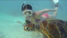 1 Day in Paradise -- Snorkelling with Friends. Richard Fitzpatrick.