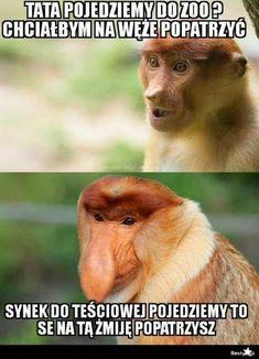 How To Train Your Dragon, Impreza, Best Memes, Monkey, Humor, Funny, Animals, Wildlife, Google