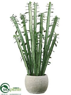 Cactus - Green - Pack of 1