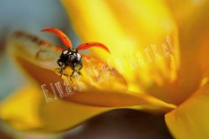 This is a digital file and NOT a physical product. Digital Image, Ladybug, Backgrounds, Ladybugs, Backdrops, Lady Bug, Background Images