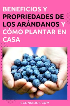 Arándanos - Propiedades del arándano Garden Online, Permaculture, Gardening Tips, Healthy Life, Harvest, Blueberry, Flora, Berries, Health Fitness