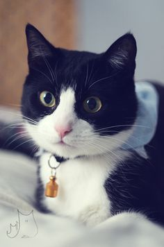 Smo <3 #cat