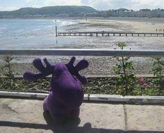 Welsh Walk for Wildlife have lost their purple moosey moose mascot somewhere near Menai Bridge, Wales. Please help get their mascot back Contact: Joanne Lucas @jojolulu on twitter or https://www.facebook.com/welshwalkforwildlife #lostteddy