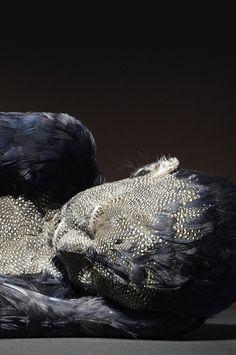 Lucy Glendinning Feather Child 6, 2012-2013
