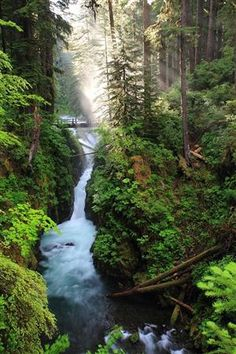 Sol Duc Falls, Olympic National Park, Washington  photo via david