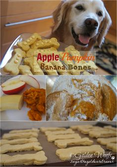 Dog Treat: Apple Pumpkin Banana Bones: Sugar The Golden Retriever - Tap the pin for the most adorable pawtastic fur baby apparel! You'll love the dog clothes and cat clothes! Puppy Treats, Diy Dog Treats, Homemade Dog Treats, Dog Treat Recipes, Healthy Dog Treats, Dog Food Recipes, Pumpkin Dog Treats, Pumpkin Dog Treat Recipe Grain Free, Dog Treats Grain Free
